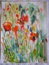 Poppies_005