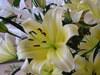 Lilies_002